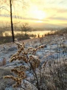 Rolandsbogen Sonnenaufgang Winter Gras Fotografie Kestermann