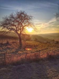 Sonnenaufgang Fotografie Kestermann Wachtberg Baum Felder Winter
